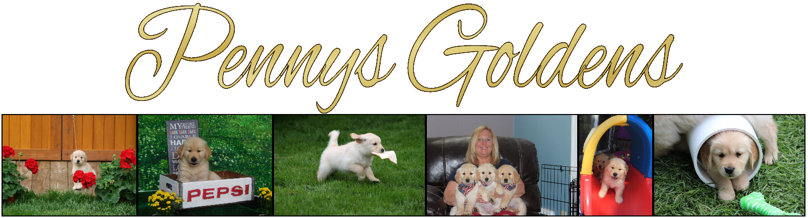 Pennys Goldens